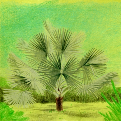 palme_grün_ansicht